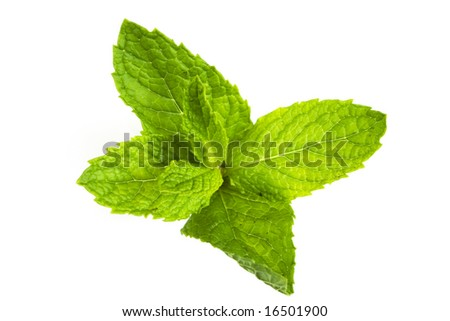 mint leaves isolated against white background