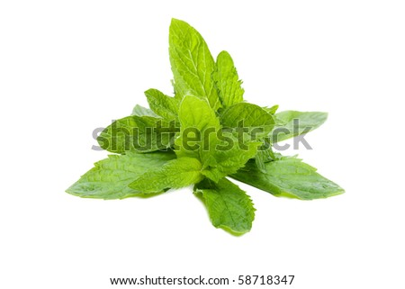 Mint leaves isolated on white - stock photo