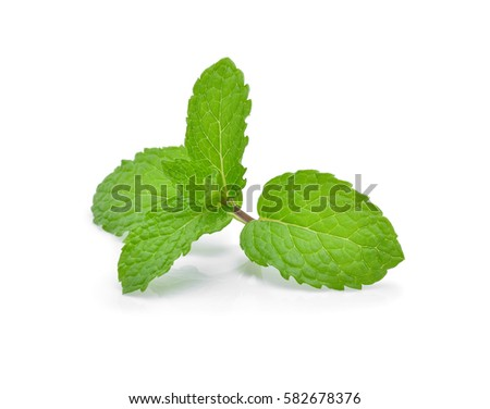 Mint leaves isolated on white background. #582678376