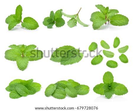 Mint leaves isolated on white background. #679728076