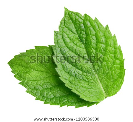 Mint leaves isolated on white. Mint Clipping Path. Professional food photography  #1203586300
