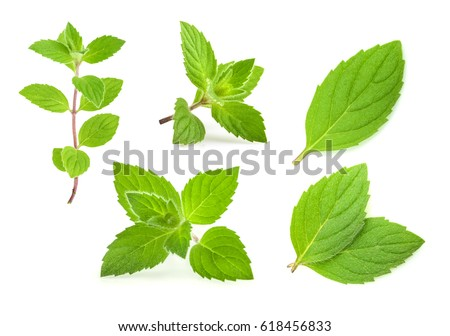 mint leaves isolated. set #618456833