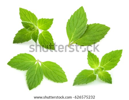 Shutterstock mint leaves isolated. set