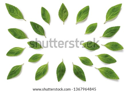 Mint Leaves, Leaves, Mint leaves isolated #1367964845