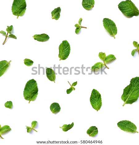 Mint leaves on white background  #580464946