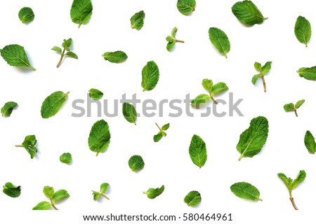 Mint leaves on white background  #580464961