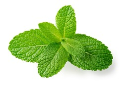 Mint leaves top view. Fresh mint on white background. Mint branch with leaf isolated. Full depth of field.