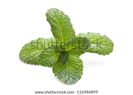 mint over white background