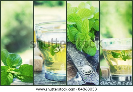 Mint tea collage. Freshly cut mint from the herb garden with mint tea and cubes of sugar