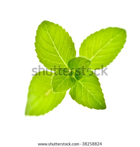 mint twig isolated on white