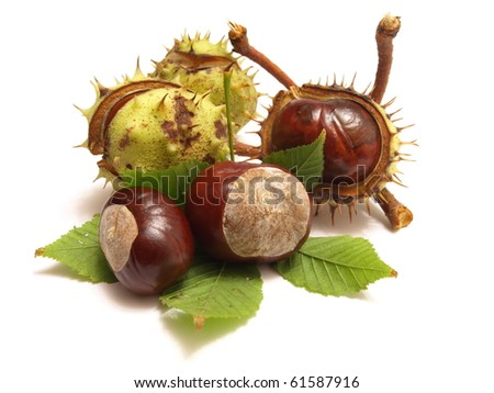 Miracle force of a chestnut