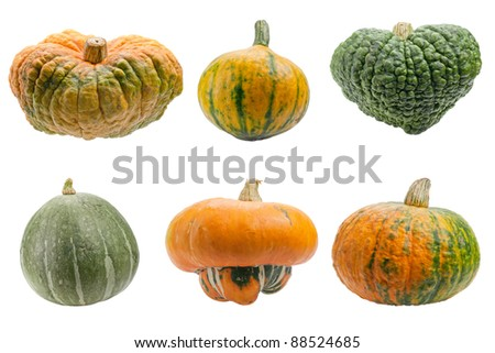 Miscellaneous pumpkins isolated on white background. Both pumpkins are ecological and natural, grew in rural garden.