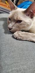 Miss Luna #cutecat #resting beautiful kitty