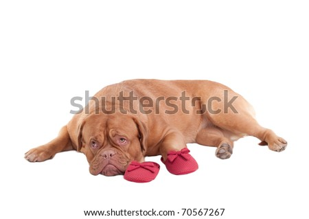 Missing You or Please, Forgive Me Concepts - Puppy with slippers