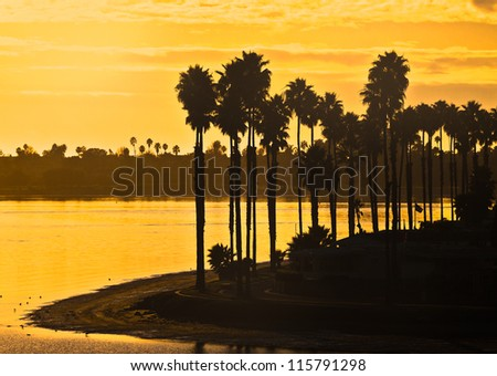Mission Bay Palm Trees at Sunset Located in Sunny San Diego, Southern California