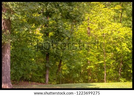 Missouri's lush forestry #1223699275
