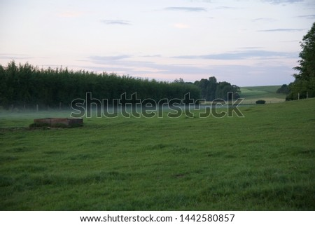 Mist: a low mist hangs over a field in the early evening of a June day in northern France #1442580857