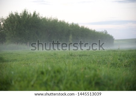 Mist: a low mist hangs over a field in the early evening of a June day in northern France #1445513039