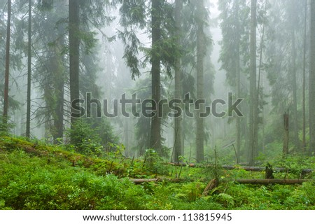 Mist and forest in Carpathian Mountain Range