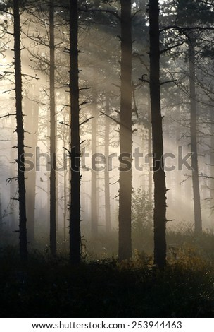Mist and sunlight in the forest at Southern Finland. #253944463