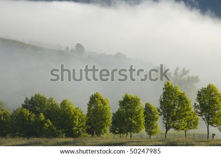 Mist and trees in the Drakensburg, South Africa