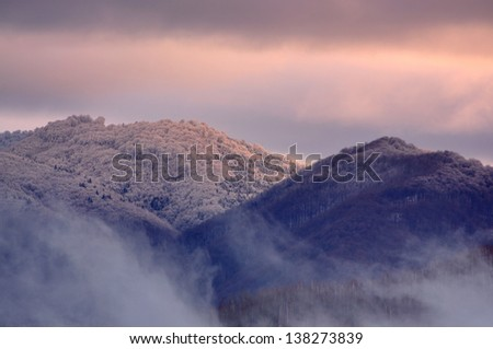 Mist covering the pine trees of a mountain in sunrise