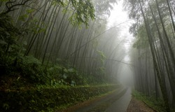 Mist forest road. Road in misty forest. Forest road in misty. Forest mist view