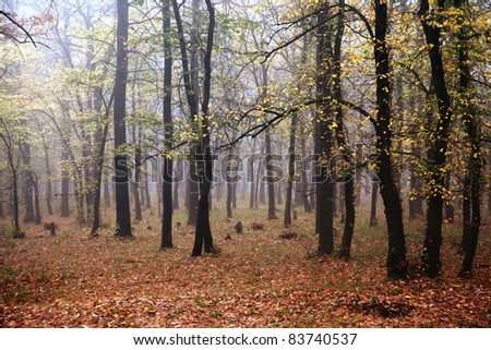 Mist in the autumn forest