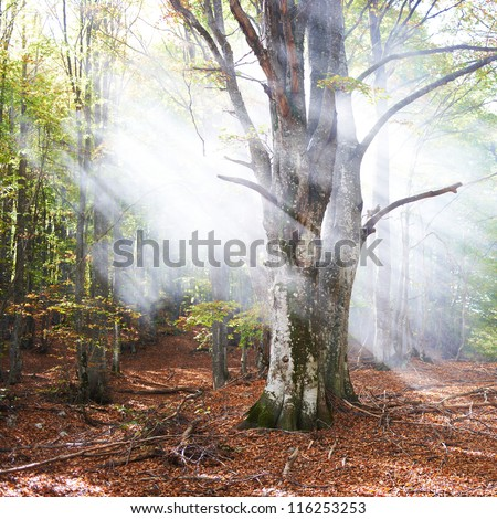 Mist in the autumn forest. Trees with green and yellow leaves - stock photo