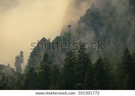 Mist in the mountains of Transylvania