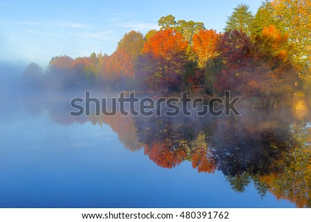 Mist on the water and autumn coloured trees #480391762