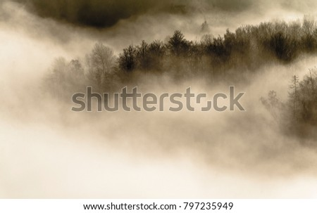 Mist over the lake and forest #797235949