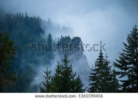 mist rising from valleys in forest in slovakia Tatra mountains. sunny day seen from above, walking above clouds #1365590456