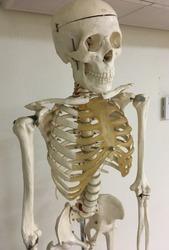 Mister Skeleton Smiles