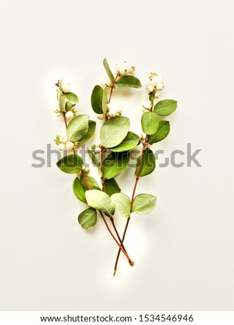 Mistletoe branches with berries on the wooden background. Shallow dof. #1534546946