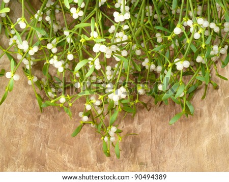 Mistletoe cutting