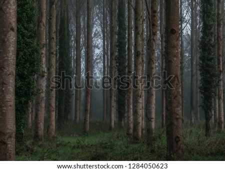 Misty and ominous woodland