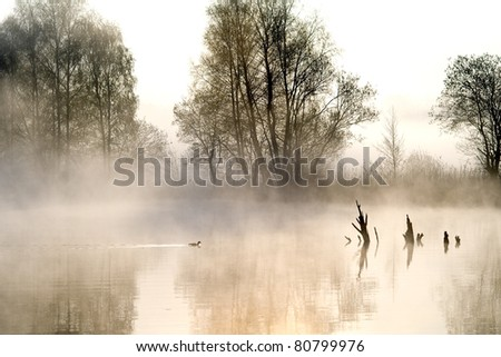misty atmosphere