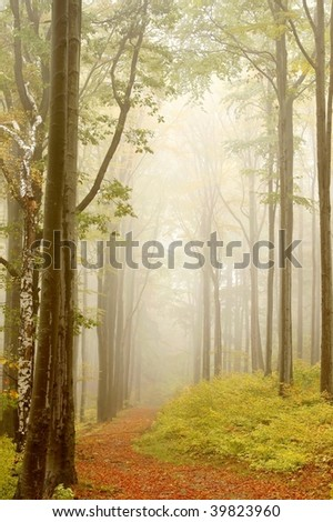Misty autumn forest path with beech trees and willow on the left. Photo taken in October.