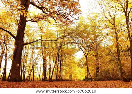 Misty autumn forest with the sun rays