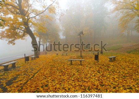 Misty autumn in the park scenery