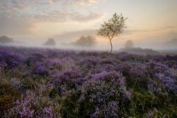 Misty Autumn mornig on Westleton Heath.
