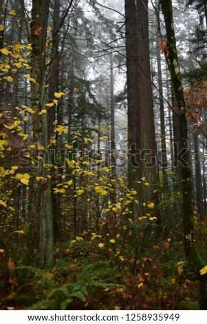 Misty Autumn woods #1258935949