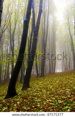 Misty beautiful autumn forest; the mountains.