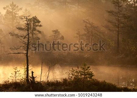 Misty bog landscape of Raganu (Witches) moorland in Kemeri nature reserve, Lapmezciems, Latvia