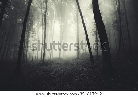 misty dark forest #351617912
