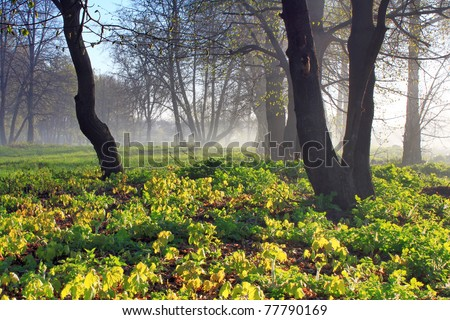 Misty dawn at the edge of the forest in spring