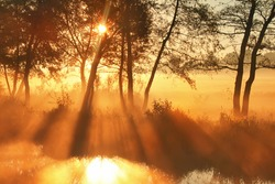 Misty dawn at the lake in spring