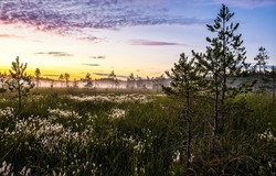 Misty dawn over the field. Early morning fog at nature dawn. Nature at dawn. Sunrise early morning outdoors