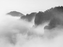 Misty dreamy landscape. Deep misty valley in autumn Saxony Switzerland park full of heavy clouds of dense fog. Sandstone peaks increased from foggy background.  Black and white picture.